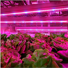 10pcs 0.5m 27Red+9Blue 10W LED Grow Light Bars Light Strip Hydroponic Plant Flowers Vegatables Greens LED Grow Plant Growing