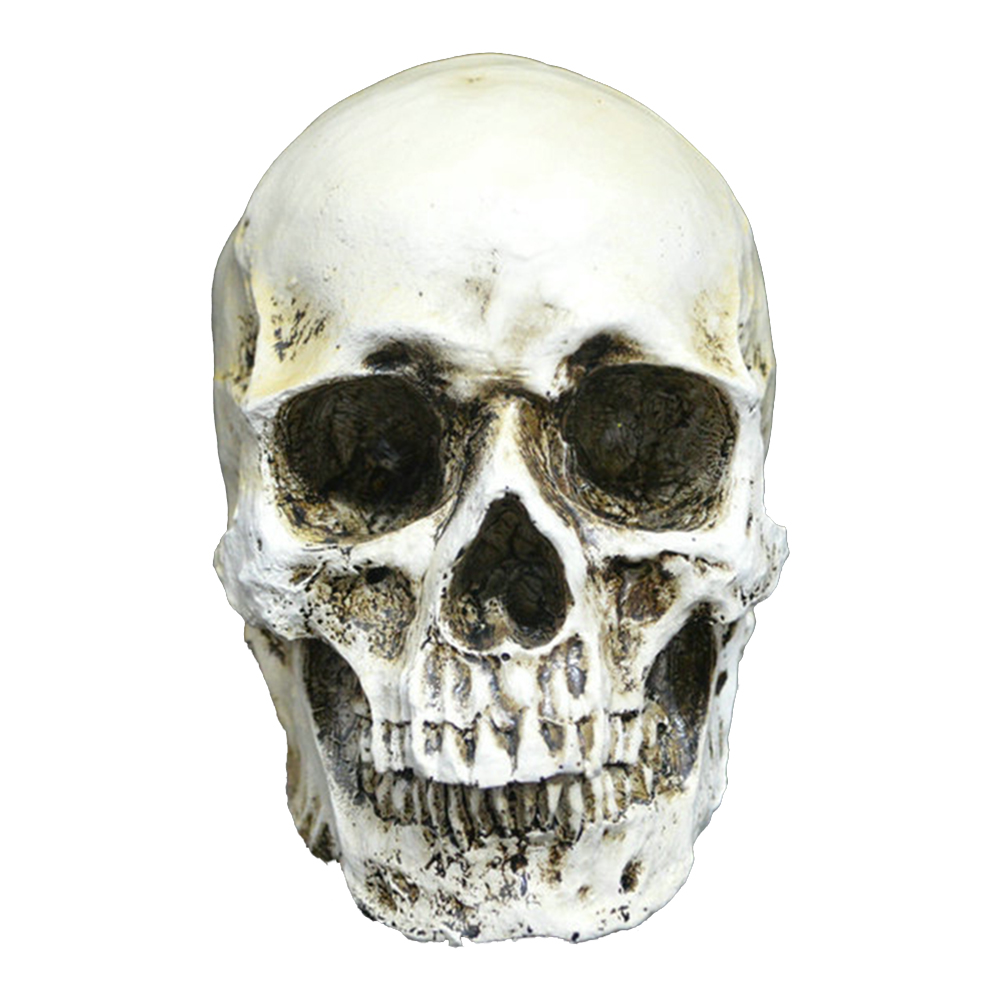Halloween Prop Resin Party Sculptures Statues Simulation Home Human Skeleton Portable Craft Decoration Funny Skull Head