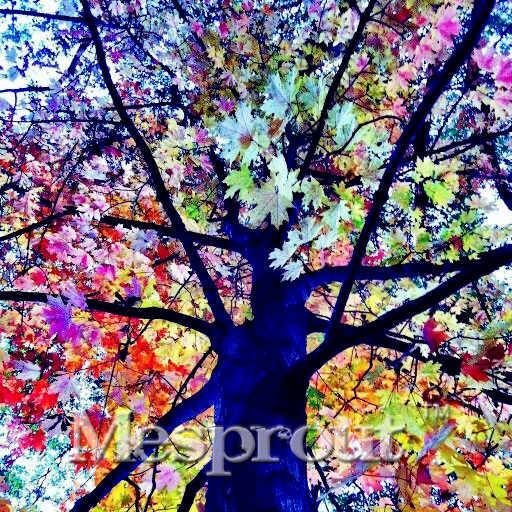 نادر قوس قزح شجرة بونساي الكافور Deglupta مينداناو اللثة المنزل حديقة العملاق شجرة بونساي شجرة بونساي 100 قطعة/الحقيبة