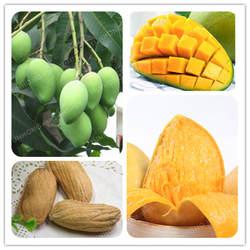 Mangifera Indica бонсай 1 шт./пакет дерево бонсай манго бонсай Органических Фруктов Бонсай Sweet Tastypot Diy домашний сад посадки