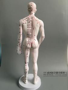 Image 2 - Human Body Acupuncture Model Male Meridians Model Chart Book Base 50cm