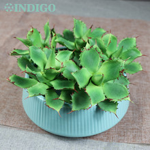 5PCStar Cactus Aloe Echeveria Elegance Artificial Succulent Plant Plastic Flower Table Decoration Green Free Shipping