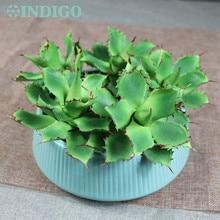 5PCStar Cactus Aloe Echeveria Elegance Artificial Succulent Plant Plastic Flower Table Decoration Green Free Shipping