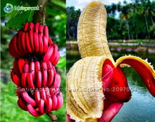 New Fresh Seeds Rare Scarce 100PCS Imported Banana Seeds Milk Taste Beautiful Delicious Fruit Seeds
