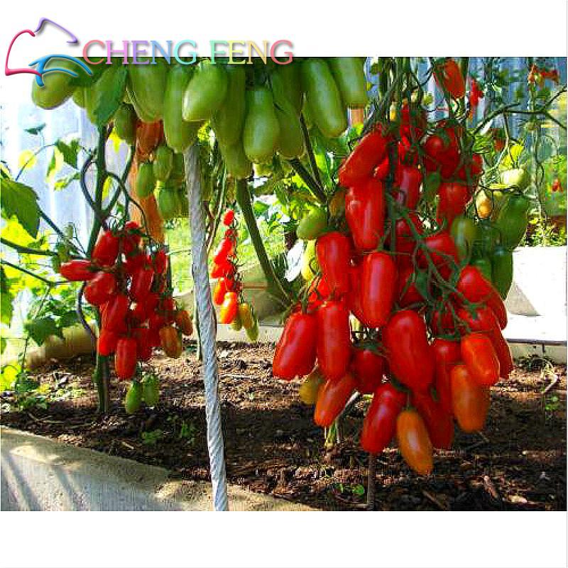 200pcs/bag Rainbow Tomato Seeds Rare Bonsai Heirloom Tomato Seed Organic Vegetable * Fruit Seeds Potted Plant For Home Garden
