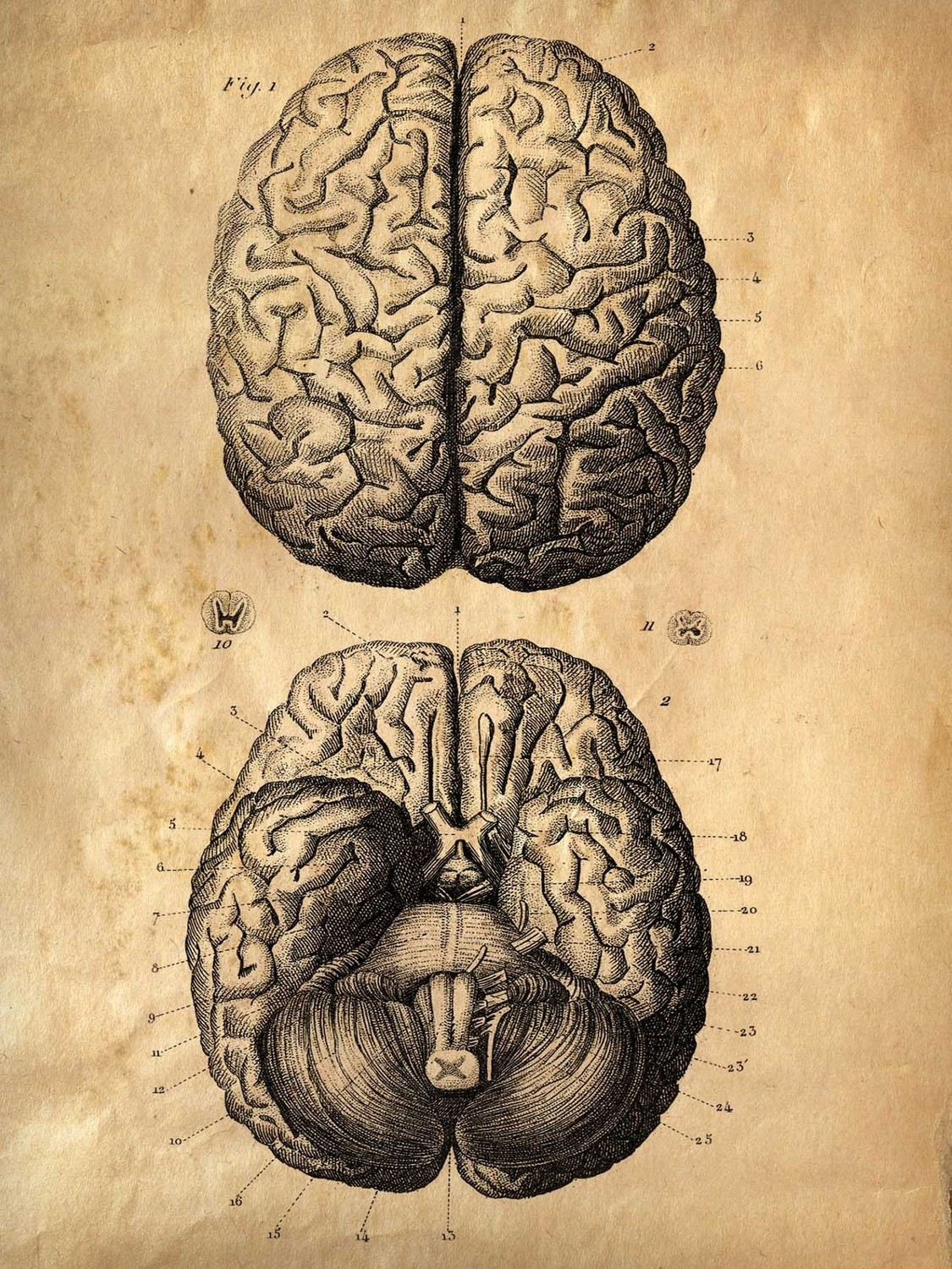 Old Anatomy Posters Topsimages