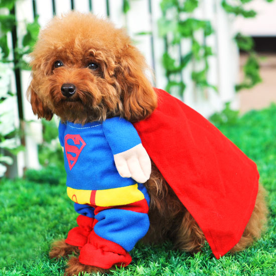 8f06d8ba0fc SUPERMAN Pet Cat Dog Costume Party Clothes puppy cosplay FUN size XS ...
