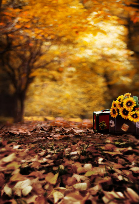 Fall Desktop Wallpaper Themes Children Photography Background Forest Pattern Background