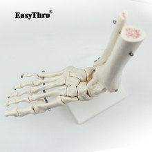 Ankle Joint Model Humerus Foot Bone Skeleton Model High Quality Medical Science Doctor Recommended 1 1 human anatomy skeleton foot joint function skeleton model medical teaching foot bone model with ligament traumatic pistol