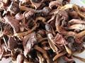 Free shipping 200g Northeast native pure wild pine mushrooms, yellow boletus, Wild Organic Dried mushroom sticky