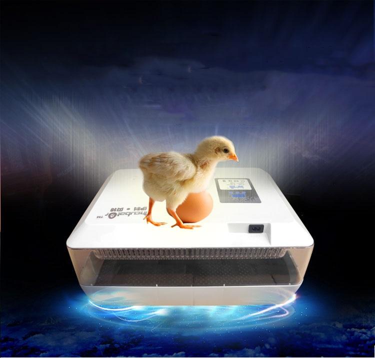 1pcs Mini Egg Incubator for 60 Chicken Eggs, 40 Duck Eggs, 90 Quail Eggs 60 eggs incubator new design jn5 60 mini egg incubator poultry hatcher egg chicken quail duck incubator