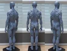 1:6 30cm PU Human skeleton anatomical Painting model for sale Anatomical Anatomy Skull Sculpture Head body Muscle  Artist