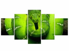 5 Pieces Free Shipping Canvas Painting Wall Art green Boa constrictor animal poster Printing Decor Frame
