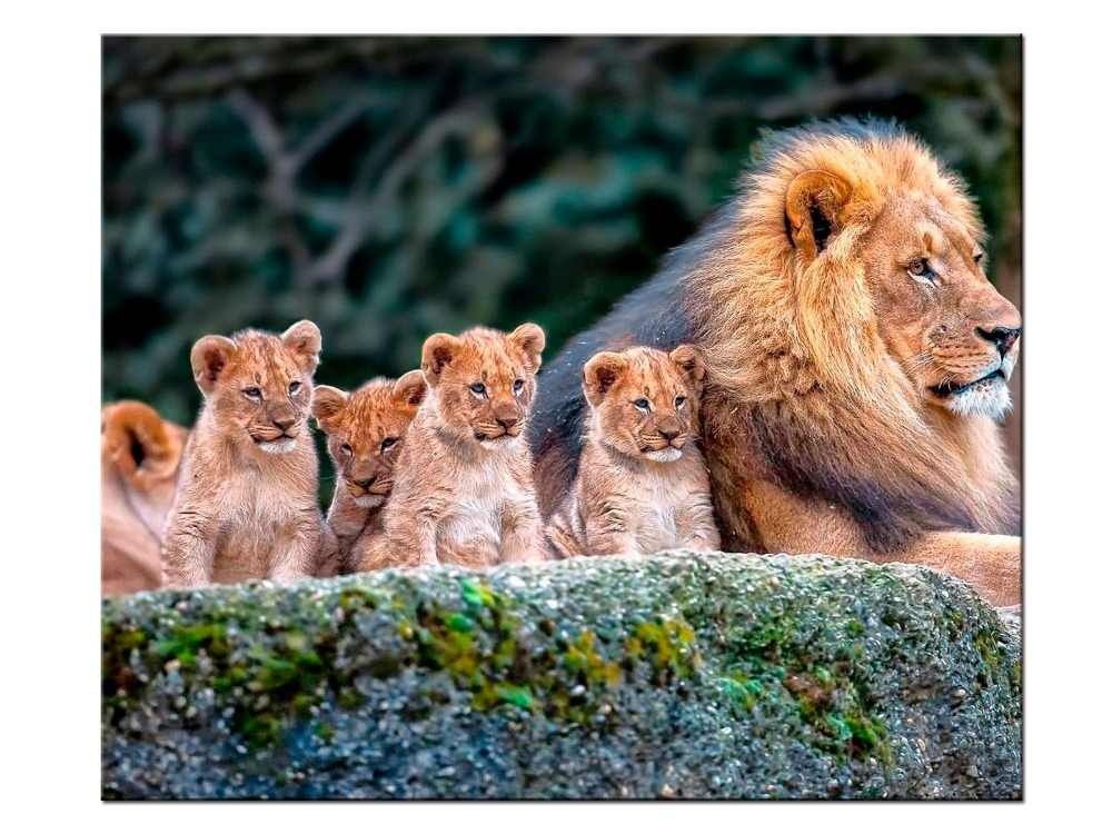 1 pieces / set Animal Painting Lion King Posters Wall Art and Prints Home Decor Canvas Pictures for Living Room