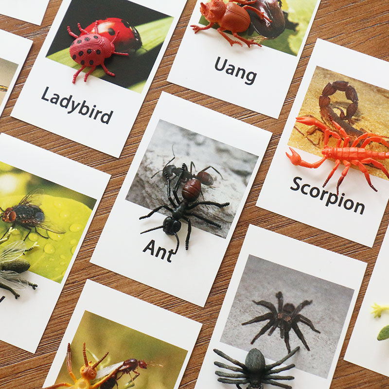 Home Montessori Educational Cards Montessori Insect Words Learning Card Educational Toys For Kids Juguetes Brinquedos Mj1264h Agreeable Sweetness