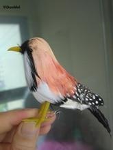 Buy Zebra Finch Bird And Get Free Shipping On Aliexpress Com