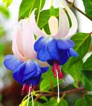 200pcs/bag Fuchsia seeds, Lantern flower,bonsai begonia flower seeds potted plant for home garden