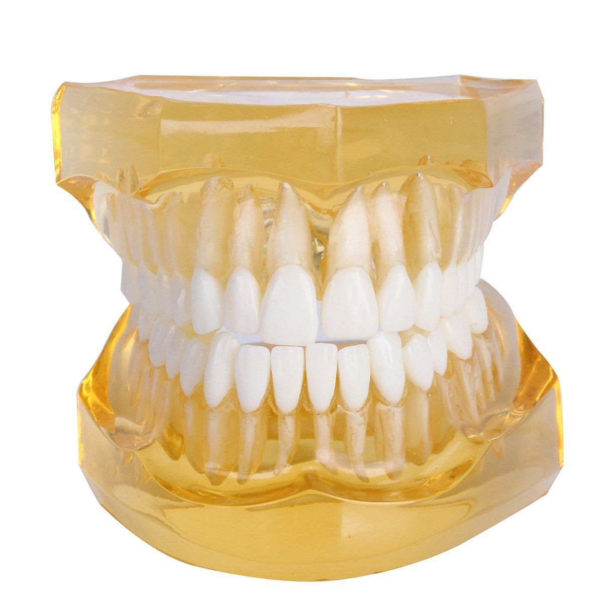 Dental Removable Teeth Model Adult Typodont Model for Dentist (Color Orange) soarday children primary teeth alternating transparent model dental root clearly displayed dentist patient communication