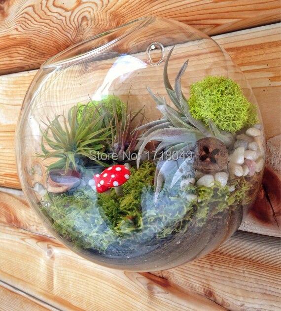 Image Result For Indoor Cactus Garden