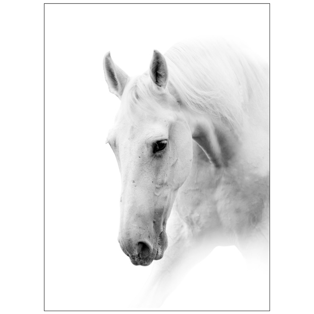 Black and white horse head painting print on