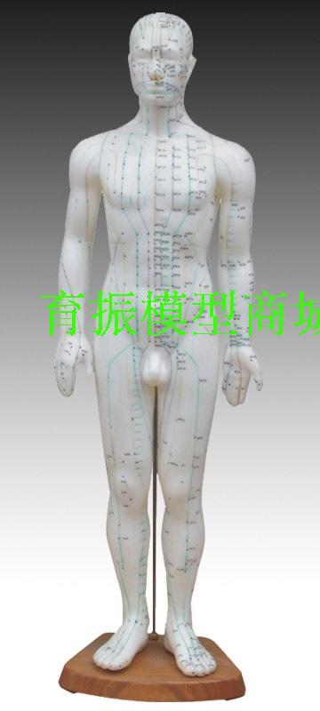 Safety TRAINING MANIKIN Male 60cm ex-b2 model leather white mannequin FOR Nursing doctor maritime safety