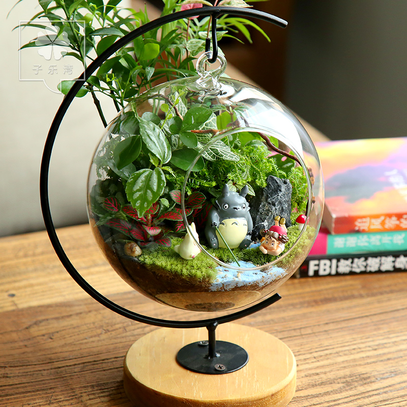 Potted plants within moss green bottle micro landscape for Small green outdoor plants