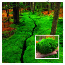 100Pcs bonsai Moss garden, green plant,Decorative Grass flores,Potted Plant For DIY Home(China)