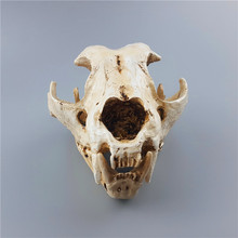 MRZOOT animal polar bear wolf dog cat skull model home decoration resin handicraft medical teaching aids specimen