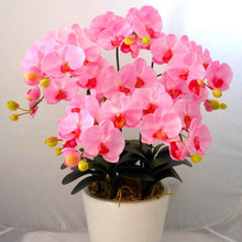 25 varieties of Bonsai pot Flowers Seeds Senior Ornamental Orchid home garden Plants Indoor 200pcs Phalaenopsis Orchid Seed