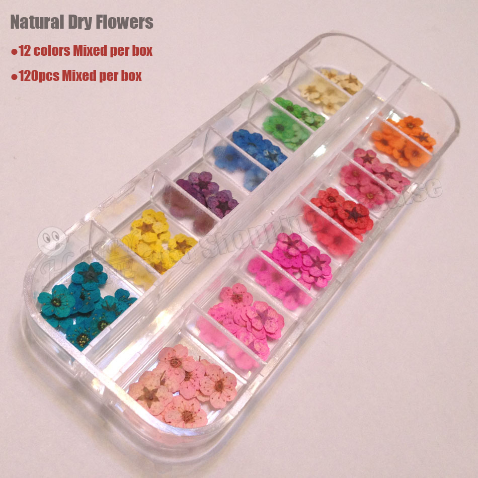 Aliexpress Free Shipping Clical 100 Nature Pressed Flower A Grade Dried  Flowers For Nail Art