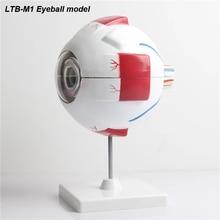 LTB-M1 модель человеческого глаза модель увеличения глаза модель глаза анатомия модель человеческого глаза обучающая модель медицина
