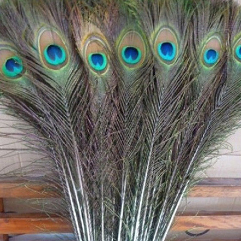 Wholesale Beautiful paon Yeux plumes long 10-12 in 25-30 cm