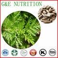 Orgânica Pó de Artemisia Annua Artemisinina Extrato Da Cápsula 500 mg * 300 pcs