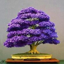 50pcs Mini Beautiful Japanese Purple Maple plantas And Diy Plant Bonsai Rare Tree plants Easy to grow home garden flowers цена