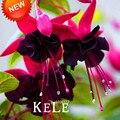 Venda quente! Roxo Pétalas Duplas Fúcsia Sementes Em Vasos Sementes de Flores Em Vasos de Plantas Penduradas Flores Fúcsia 50 Pçs/lote, # QS1EPX