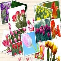 Garden Hot selling 500pcs Tulip bulbs seeds (mix random color) bonsai flower seed DIY home garden free shipping for Christmas