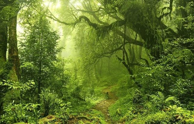 alibaba グループ aliexpress comの 背景 からの ジャングル観葉雨林