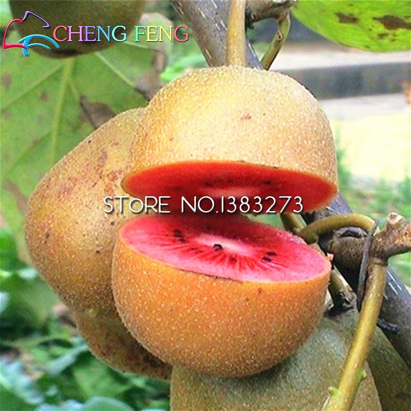 promotions 100pcs mini kiwi fruit seeds bonsai organic