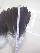 Wholesale 10 pc 14-16inches / 35-40cm high quality natural  Eagle bird feathers