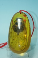 China Old Amber Unique Cicada Amber Pendants Classic Art Collection And Home Decorations