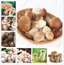 Hot sales! 500 pcs/bag Mushroom bonsai Funny Succlent Plant Amazing Edible Health Vegetable For Happy Farm Free Shipping(China)