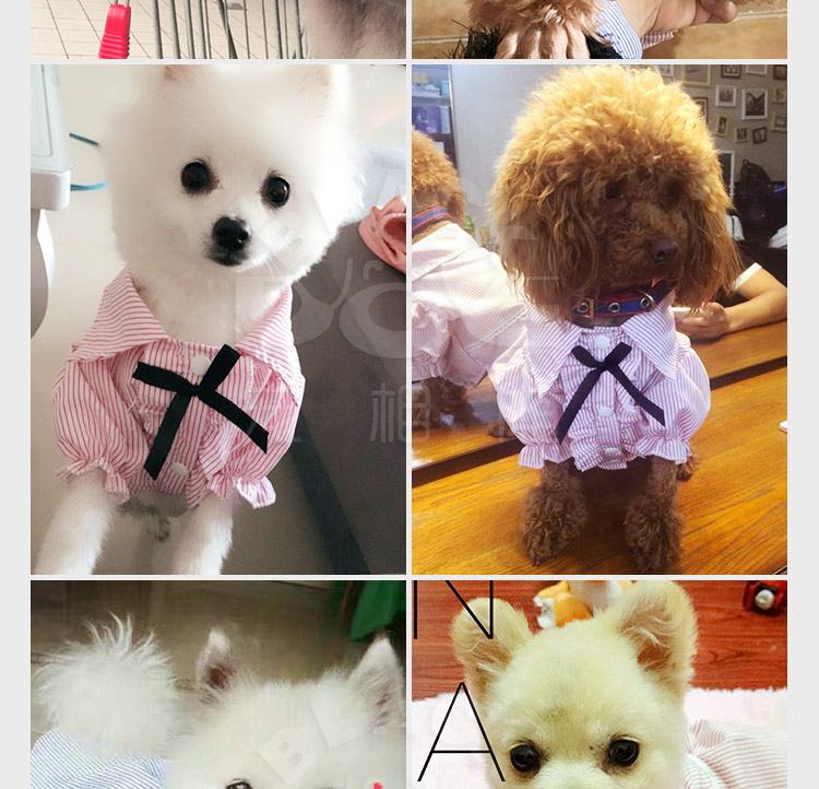 PipiFren Cats Clothes Clothing Small Dogs T Shirts Colorful Cheap Cute Fashion Clothes For Pets Costume blusao Vetement chien 7