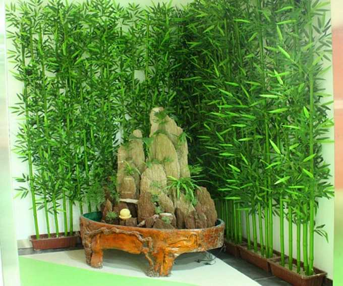60Pcs Chinese Mini Moso Bamboo Seeds Phyllostachys Heterocycla