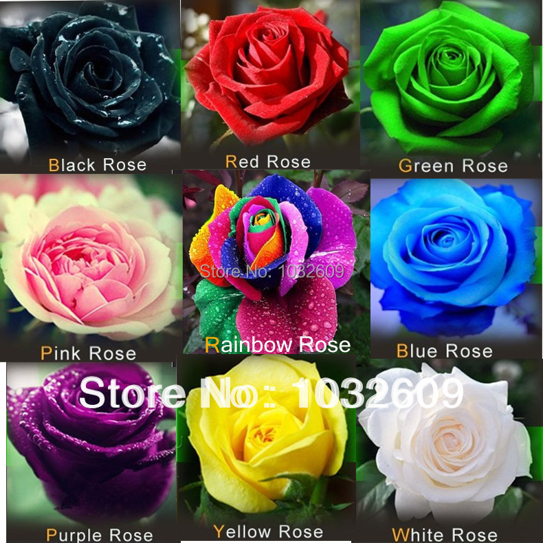 China blue plant 2017 2018 best cars reviews for Buy black and blue roses