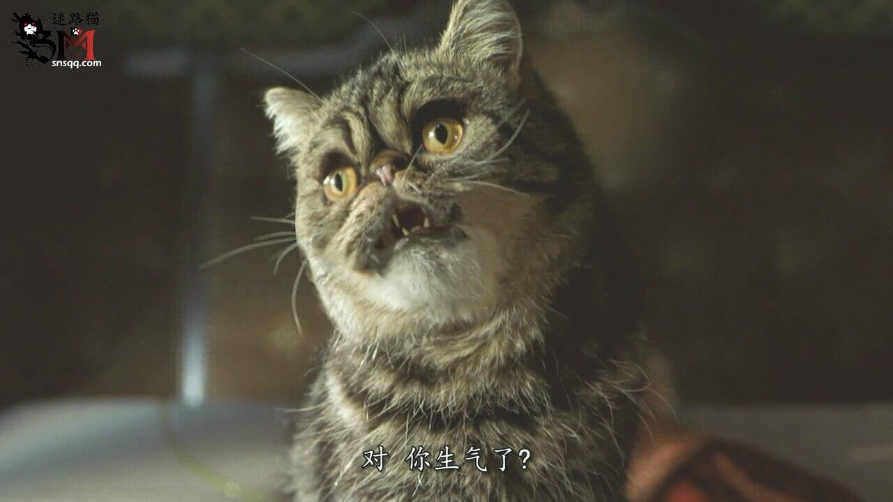 猫奴和爱猫和养猫的弭感受不到他人的关切也不会去关切他人