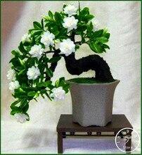 Шт. Лидер продаж! гардения жасминовидная шт. гардения завод (100)-DIY домашний сад в горшке бонсай, удивительный запах и красивые цветы для комнаты, # 3Y0YW