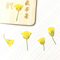 Chrysanthemum Yellow With Stem Dried Flowers Specimens Press Flower DIY Handmade Material 1 Lot 100pcs Free