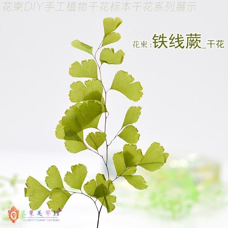 Flower Invitation Adiantum Fern DIY Handmade Material Specimens True Flower Ejia Plant Dry Flowers