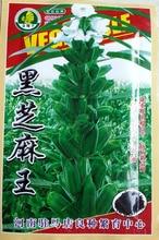 1 пакет 20 g 3000 + шт кунжутом органический естественная benne семена