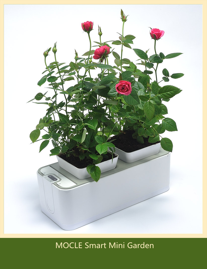 Mocle smart mini garden better than click and grow - Better homes and gardens flower pots ...